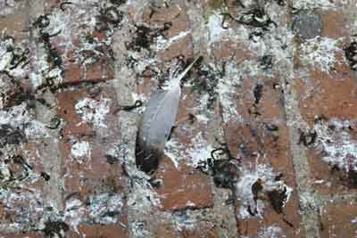Bird Faeces Cleaning
